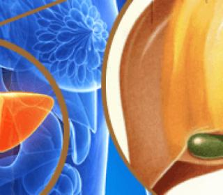Hepatológia - zsírmáj